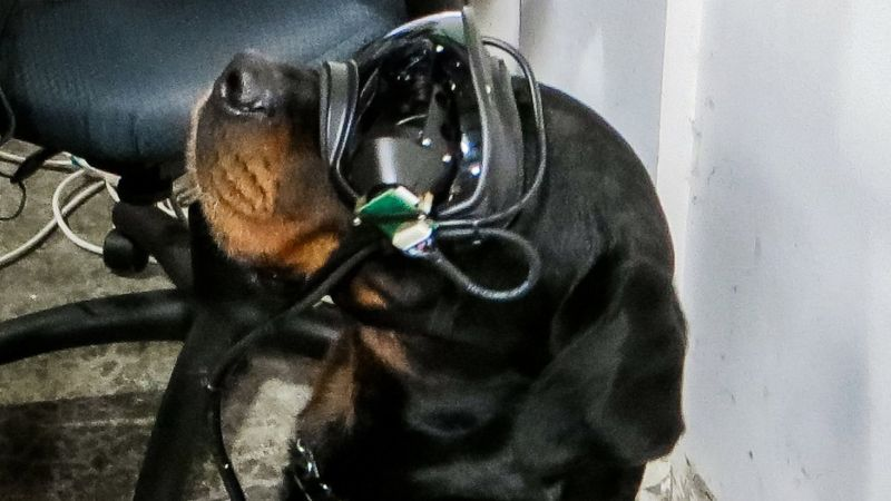 Dog wears augmented reality goggles for military working dogs 061020 CREDIT Command Sight.jpg