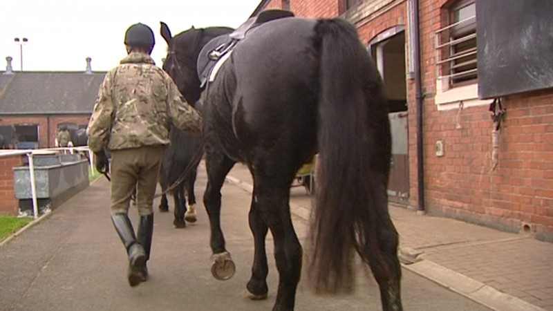 Army Horses Defence Animal Centre