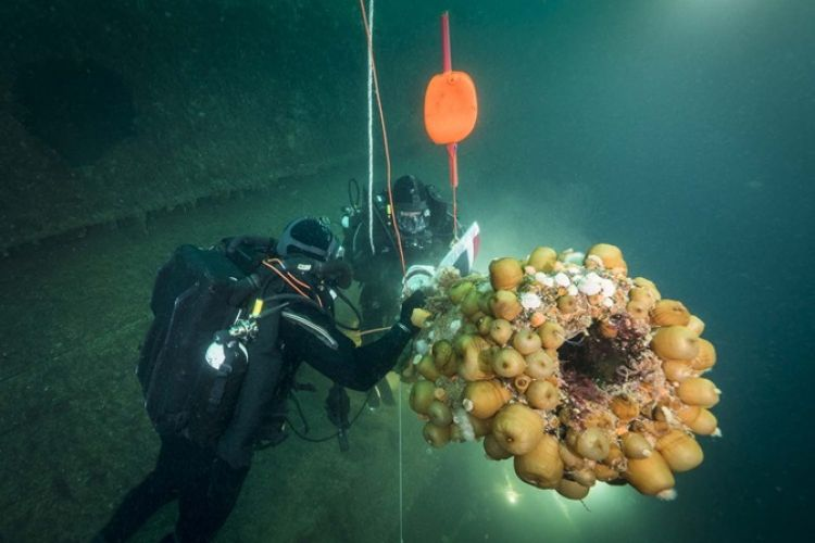 Royal Navy divers at site of HMS Royal Oak
