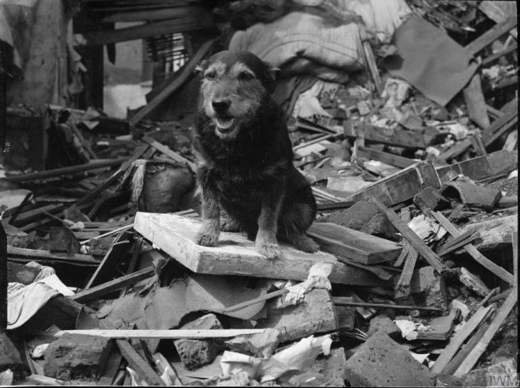 Air Raid Precautions Dog Rip Poplar London 5 August 1941 IWM D 5937 Public Domain