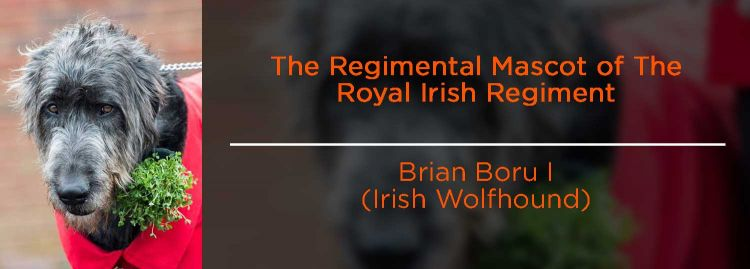 Brian Boru I (Irish Wolfhound) - Royal Irish regimental mascot
