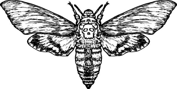 Death's-Head Hawkmoth Credit                       Shutterstock/Gwoeii