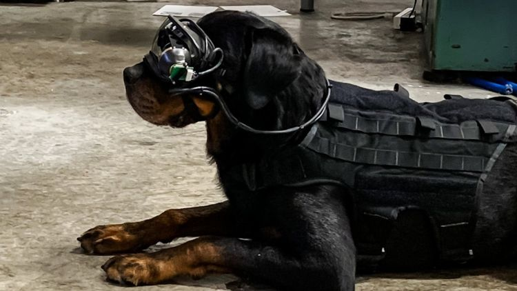 Dog wear initial prototype of augmented reality goggles for military working dogs 061020 CREDIT Command Sight.jpg
