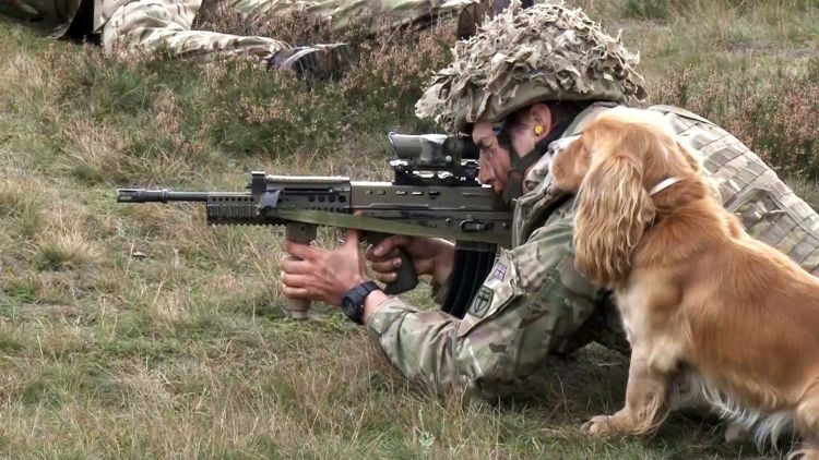 Military Working Dogs Prepare For The Sounds Of Combat