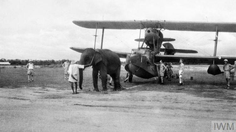 Elephant Supermarine Walrus Aircraft Fleet                       Air Arm station India June 1944 Royal Navy                       Photographer IWM