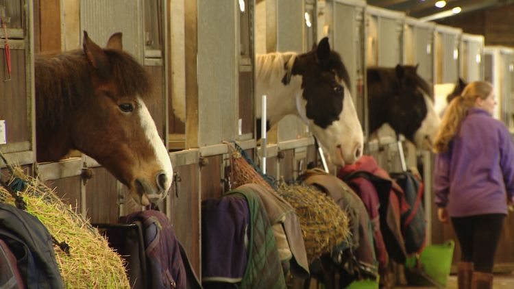 Horses at the Merrist Wood College 250319 CREDIT BFBS.jpg