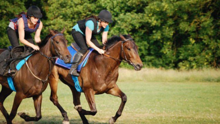 Jane McGilll Horse Training