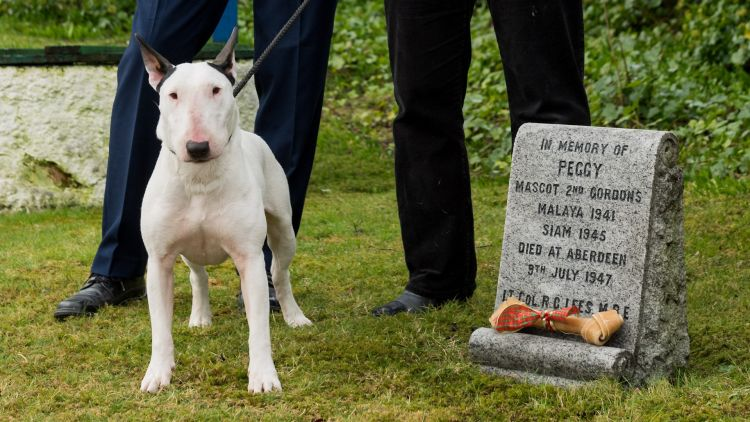 Bull terrier Billy received the award on behalf of Peggy (Picture: PDSA).