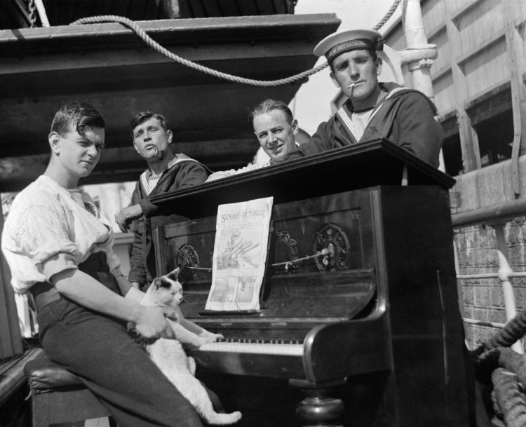 Royal Navy personnel with their ship's cat 'Nibbits' at a piano