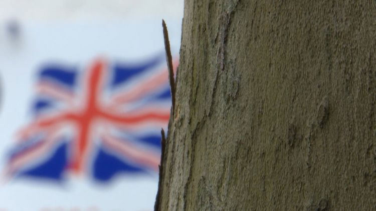 Union Flag logo of Little England shop behind tree