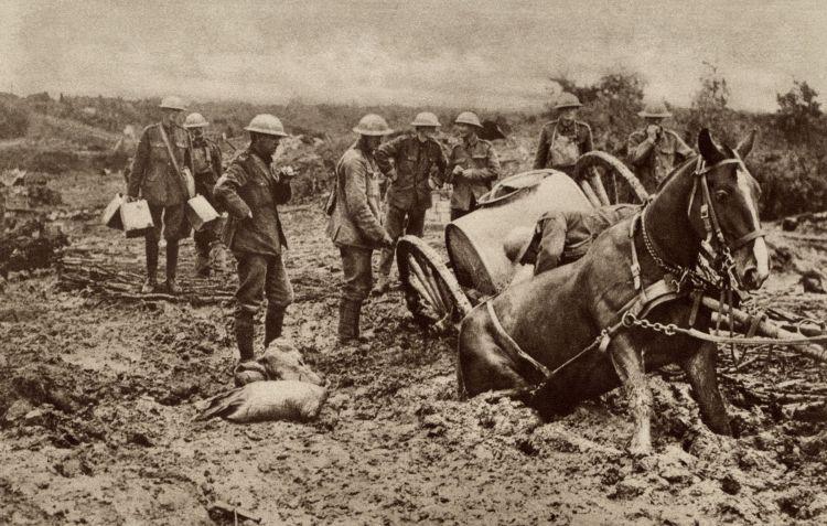 WW1 First World War Horse Flanders Mud Credit                       Shutterstock / Everett Historical