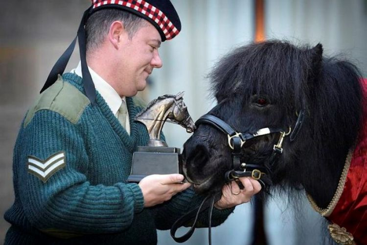 Shetland pony and former Royal Regiment of Scotland Mascot 'Cruachan III' was awarded the 'Tarragon Trophy' from The British Horse Society today at a special event held in Redford Barracks in Edinburgh.
