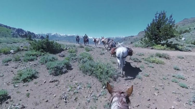 US Forces Mountain Horses