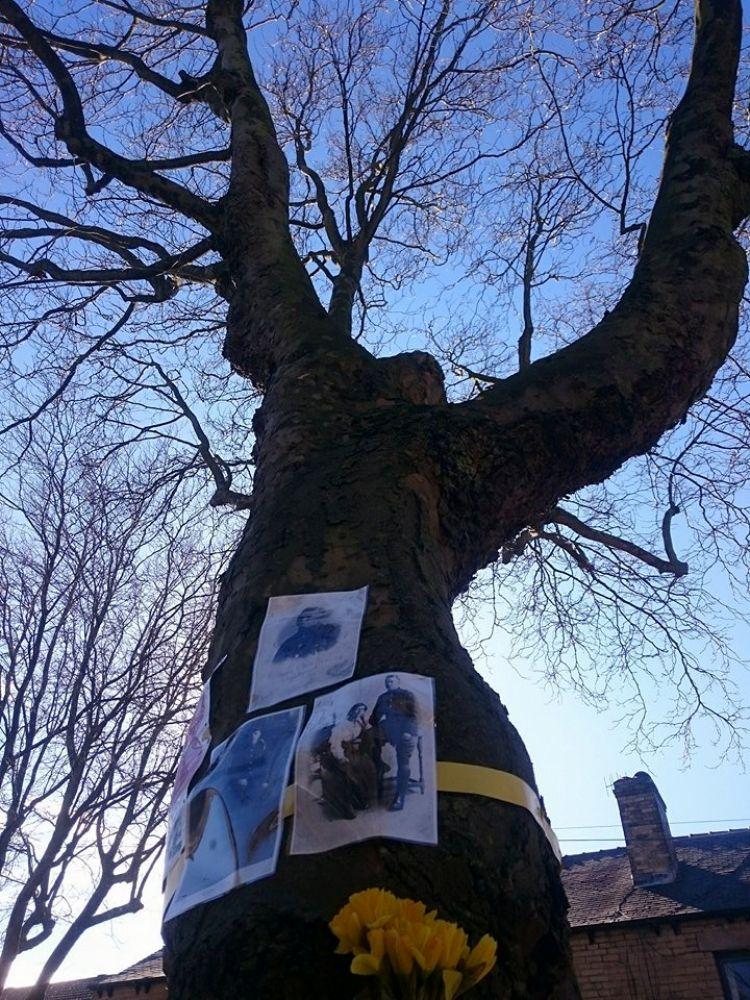 First world war sheffield war trees