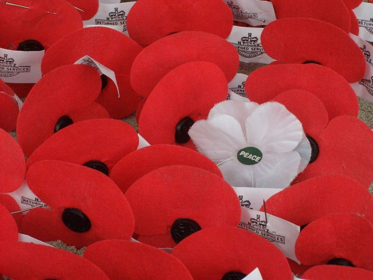 white poppy - wikipedia