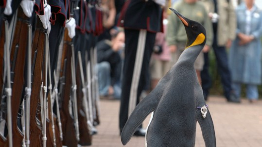 Brigadier Nils Olav the Penguin inspects the Kings Guard of Norway