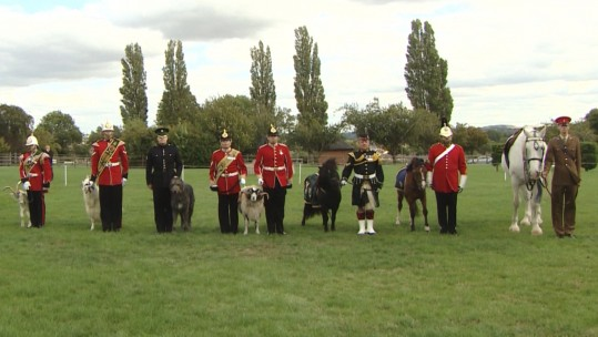 Army animals on parade at the first ever military mascot training camp