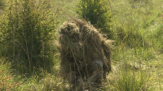 Sniper concealed in the long grass.