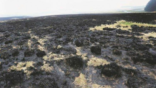 The aftermath of the fire at the training area in Brecon Beacons (Picture: Wales News Service).