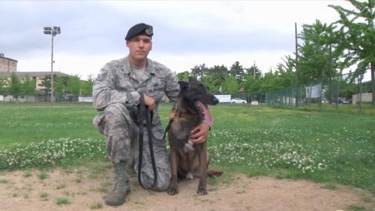 US military working dog